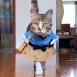 This Cat Strutting Its Stuff in a Variety of Costumes Needs a Modeling Contract Right Meow