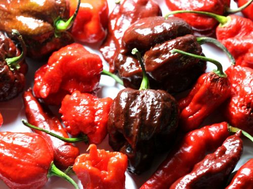 Eating the World's Hottest Pepper Could Put You in the Hospital