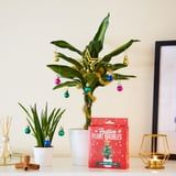 Don't Have Room For a Christmas Tree? These Adorable Plant Ornaments Are Perfect