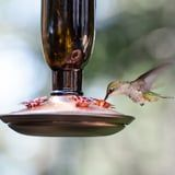 This Easy DIY Nectar Recipe Will Make Your Backyard a Haven For Hummingbirds