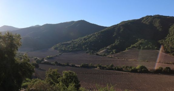Here's How Chile's Winemaking Is at the Forefront of Innovation