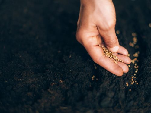 The COVID Gardening Renaissance Depends on Seeds - if You Can Find Them