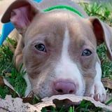 Just 32 Photos of Adorable Pit Bulls That Will Instantly Brighten Your Day