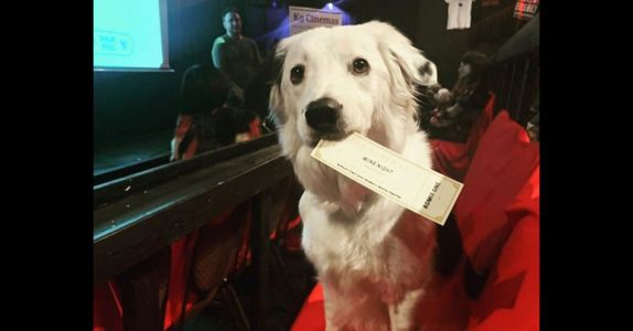 World's Best Movie Theater Lets You Bring Your Dog and Has Bottomless Wine