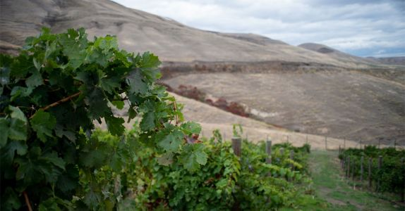 Idaho Is the Next American Wine Region That Deserves Your Attention