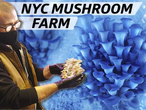 How Smallhold Farms Cultivates Rare Mushrooms for NYC Restaurants