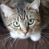 Curious Why Your Cat Looks Like A Glowing-Eyed Monster in Pictures? We Asked a Vet