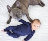 19 Photos of Frenchies With Babies That Will Cause You to Squeal in Delight