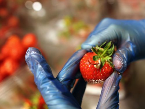 Australia Is Trying to Figure Out Who's Sticking Needles in Strawberries