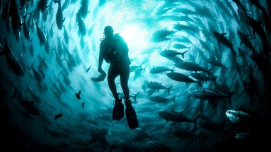 The Battle Over Fish Farming In The Open Ocean Heats Up, As EPA Permit Looms