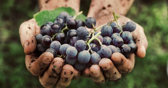 6 Questions About Natural Wine You're Too Embarrassed to Ask