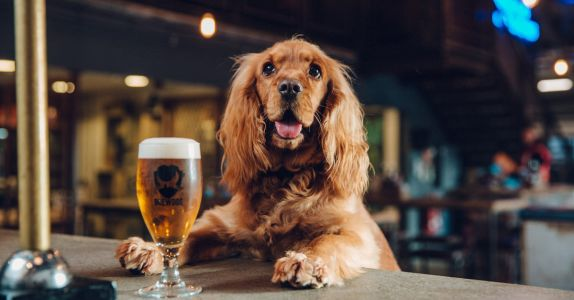 BrewDog Is Throwing All The Good Boys 'Pawties' Complete With Dog Beer