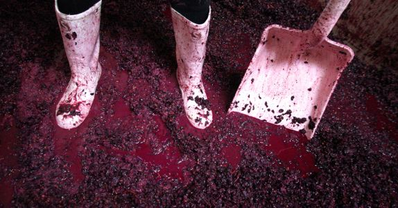 Why Some of the World's Most Exciting Pinot Noirs Are Coming From New Zealand