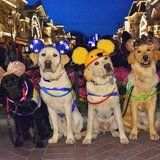 Pluto WHO?! These Service Dogs Had a Disneyland Day, and the Photos Are Too Pure