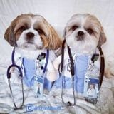 McDreamy, Who? These Dogs Dressed As Grey's Anatomy Doctors Are All I Need This Halloween