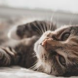 Here's Why Your Cats Keep Eating Tape, Straight From Veterinarians