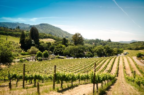 Support Sonoma: Gift Ideas from Wine Country