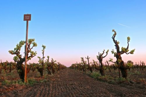 Estate Crush's new, sparkly iteration of Lodi's venerated Bechthold Vineyard Cinsaut