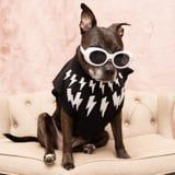 Smile For the Camera, David! This Pit Bull's Schitt's Creek Costumes Are Fabulous