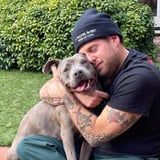 """Jonah Hill Rescued a """"Beautiful, Extra Cuddly"""" 3-Year-Old Pitbull, and She's So Cute"""