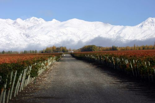 Old World Winemakers in South America: A Delicious Blend of Styles and Terrior