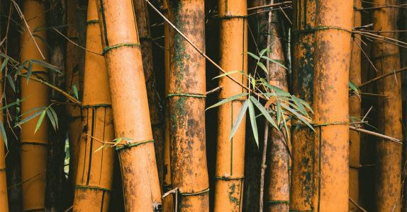 Ask Adam: Is There Such Thing as Barrel Aging in Bamboo?