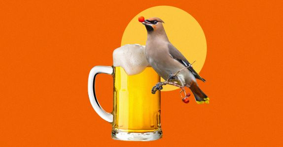Drunk Birds in Texas Reported in Record Numbers