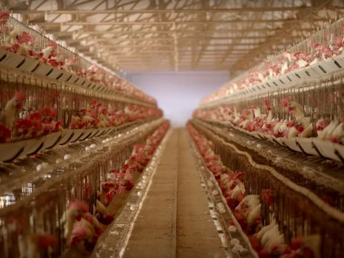 What the Critics Are Saying About Factory Farming Documentary 'Eating Animals'