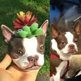 You Can Get a Custom Painted Planter of Your Dog's Face on Etsy, and It's Too Cute