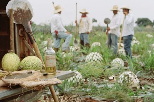How the Best Tequila is Made