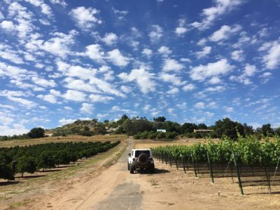 California wine on my mind: a study in two extremes