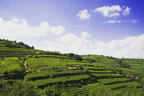 The Journey to Make Soave Classico into More than Just a Bulk Wine