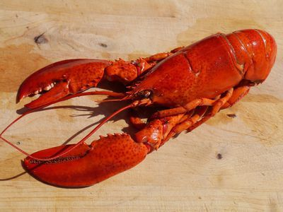 Boiling Lobsters Alive Is an Act of Cruelty, Says Switzerland