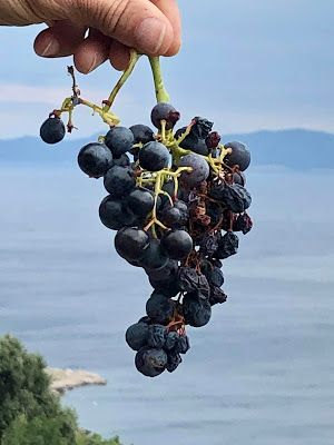 Croatian Wine Production & Exports: Some Answers