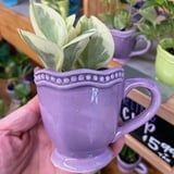 "Trader Joe's Is Selling ""Twirling Teacup Plants,"" and, Uh, Can You Say Cute?"