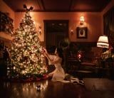 "The ""Halloween Queen"" Decorated Her Christmas Tree, and the Sparkling Result Will Transfix You"