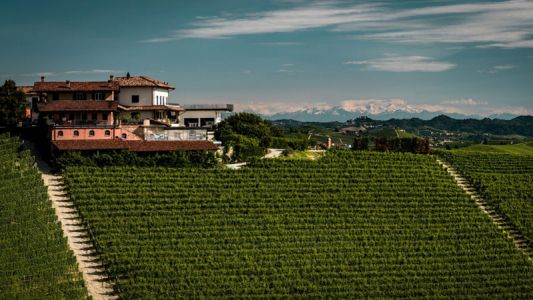 Winemakers Need to Think Big Instead of Chasing Trends in the Cellar
