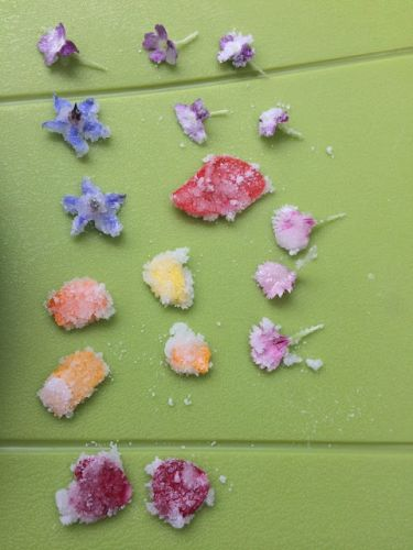 How to make candied flowers