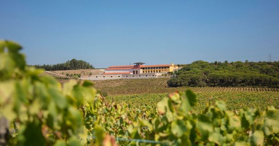 The Portuguese Winemaker Crafting Biodynamic 'Wines Without Makeup'