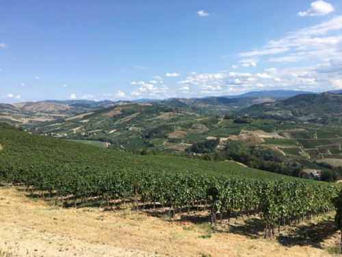 Sparkling in the north, whites in the south: Italy's 2018 harvest has begun