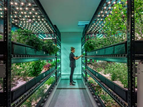Is Vertical Farming Really the Future of Agriculture?