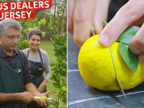 How Bhumi Growers Deals Yuzu and Rare Citrus to Michelin-Starred Restaurants