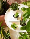 Your Desk Just Got Cuter, Thanks to These 50+ Small Plants
