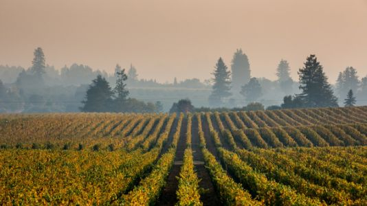 Winemakers Worry Wildfires Will Leave Whiff Of Ashtray In Their Wine