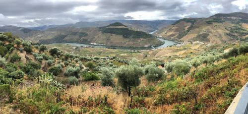 The Douro River Region: Beauty & Thriving Amidst Adversity