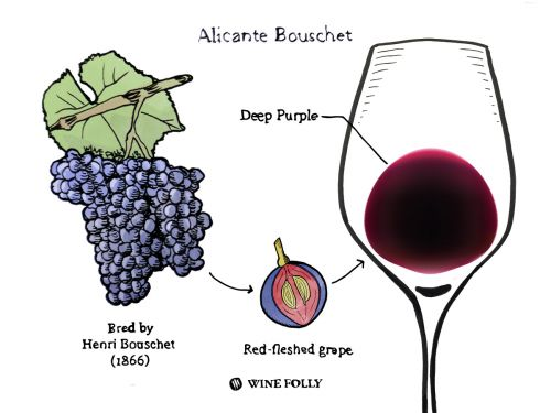 Lovers of Big Reds, Look To Alicante Bouschet