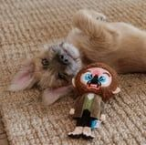 I Don't Even Have a Dog, but I Need These Home Alone Chew Toys - Look at the Paint Can!