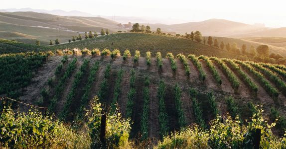 'Beyond Organic': The Sonoma Trailblazers Redefining Sustainable Winemaking