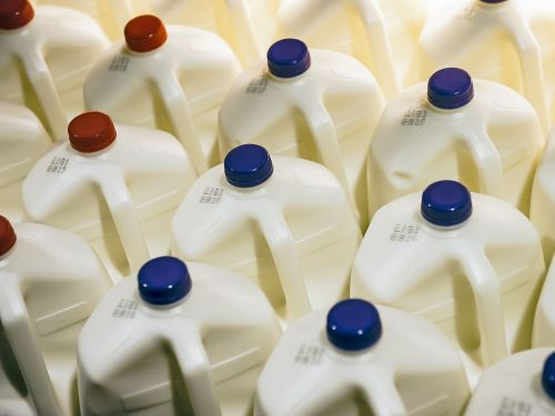 America's Obsession With Oat Milk Is Hurting the Dairy Industry