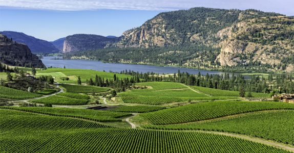 Okanagan Valley to Become Global Leader in Certified Organic Wine Production by the End of 2021